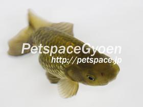 IMGP3388.jpg